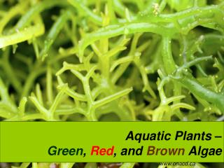 Aquatic Plants –  Green ,  Red , and  Brown  Algae