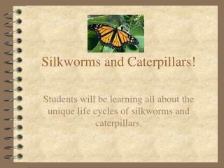 Silkworms and Caterpillars!