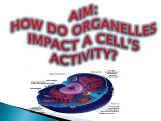 AIM: HOW DO ORGANELLES  IMPACT  A CELL'S ACTIVITY?