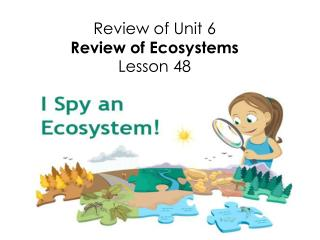 Review of Unit 6 Review of Ecosystems Lesson  48