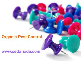 Best Yet cedarcide pest control bed bugs Killer spray Pets