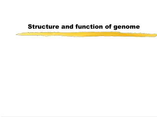 Structure and function of genome