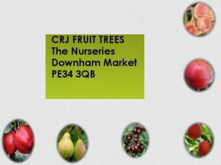 CRJ Fruit Trees Nursery