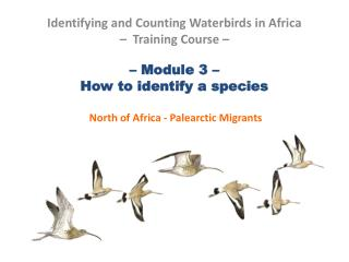 – Module 3 –  How to identify a species  North of Africa - Palearctic Migrants