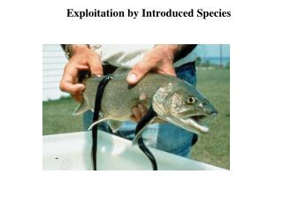Exploitation by Introduced Species