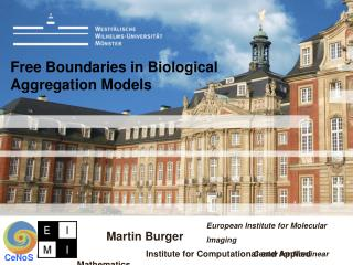 Free Boundaries in Biological  Aggregation Models