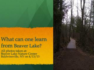 What can one learn from  Beaver Lake?