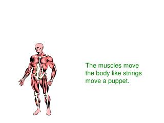 The muscles move the body like strings move a puppet.
