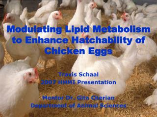 Modulating Lipid Metabolism to Enhance Hatchability of Chicken Eggs