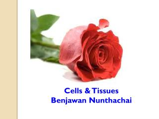 Cells & Tissues Benjawan Nunthachai