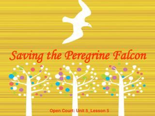 Saving the Peregrine Falcon