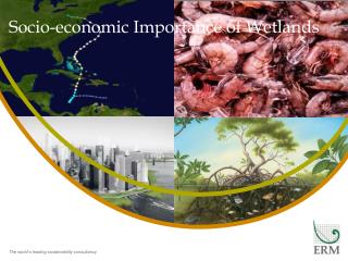 Socio-economic  Importance  of  Wetlands
