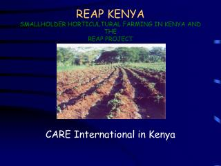 REAP KENYA SMALLHOLDER HORTICULTURAL FARMING IN KENYA AND THE REAP PROJECT