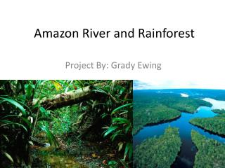 Amazon River and Rainforest