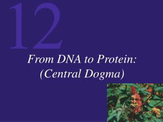 From DNA to Protein: (Central Dogma)