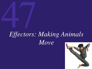 Effectors: Making Animals Move