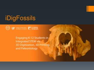 iDigFossils