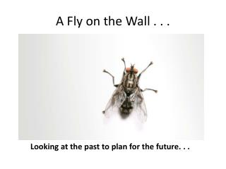 A Fly on the Wall . . .