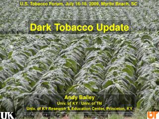 Dark Tobacco Update