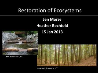 Restoration of Ecosystems