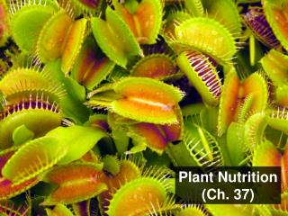 Plant  Nutrition (Ch.  37)