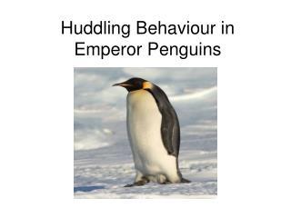 Huddling Behaviour in Emperor Penguins