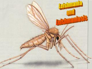 Leishmania  and  Leishmaniasis