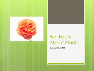 Fun Facts About Plants