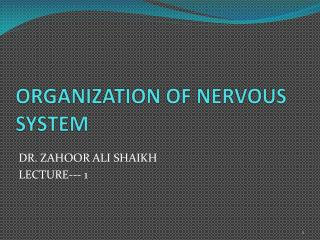 ORGANIZATION OF NERVOUS SYSTEM