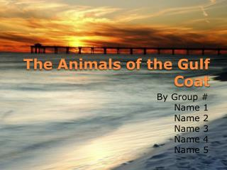 The Animals of the Gulf Coat