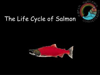 The Life Cycle of Salmon