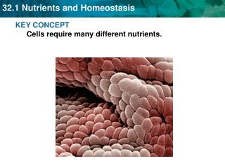 KEY CONCEPT Cells require many different nutrients.