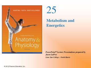 25 Metabolism and Energetics