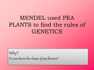 MENDEL used PEA PLANTS to find the rules of GENETICS
