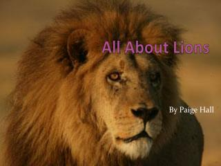 All About Lions