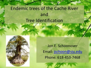 Endemic trees of the Cache River and Tree Identification