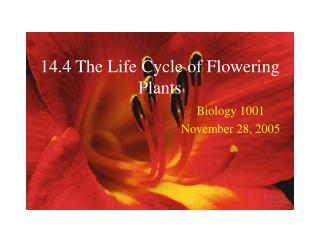 14.4 The Life Cycle of Flowering Plants