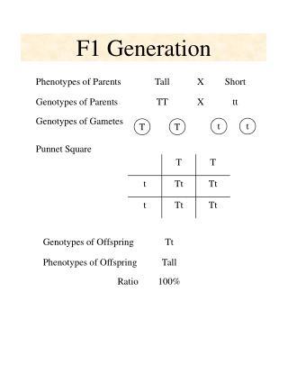 F1 Generation