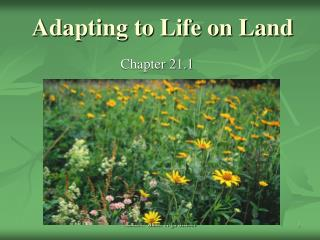 Adapting to Life on Land