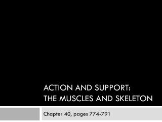Action and support: the muscles and skeleton