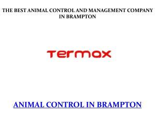 animal control in brampton