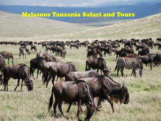 Malasons Tanzania Safari and Tours
