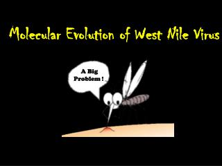 Molecular Evolution of West Nile Virus