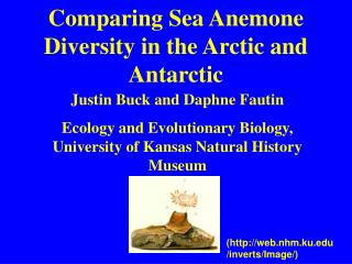 Comparing Sea Anemone Diversity in the Arctic and Antarctic