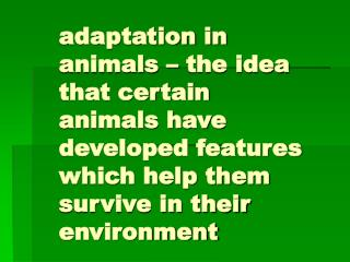 Adaptation in animals   the idea that certain animals have developed features which help them survive in their environme