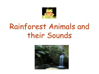 Rainforest Animals and their Sounds