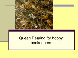 Queen Rearing for hobby beekeepers