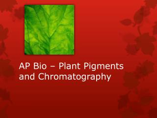 AP Bio – Plant Pigments and Chromatography