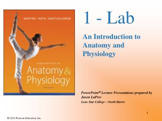 1 - Lab An Introduction to Anatomy and Physiology