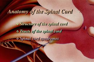 Anatomy of the Spinal Cord    Structure of the spinal cord Tracts of the spinal cord Spinal cord syndromes